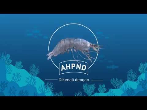 エビの伝染病【急性肝膵臓壊死症(AHPND)】